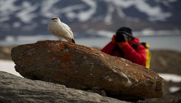 Male ptarmigan on a rock.