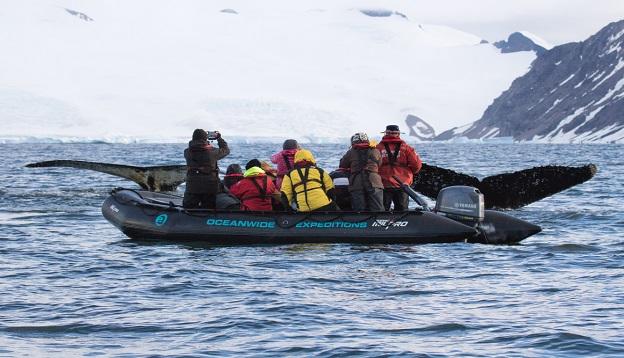 Humpback whale, Antarctica.