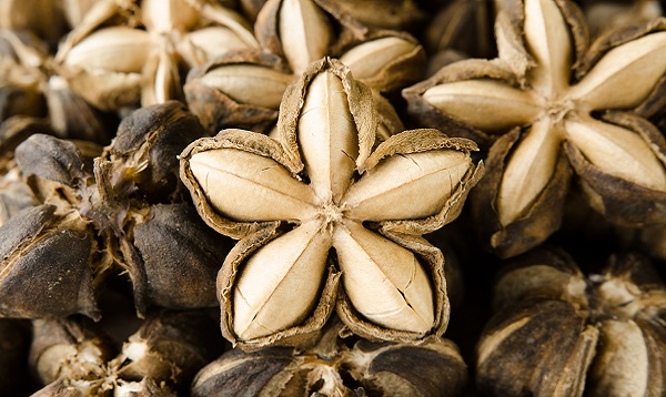 Sacha Inchi Seeds. Photo Credit: Shutterstock