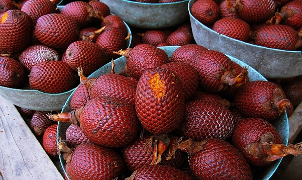 Aguaje or Moriche palm fruit. Photo Credit: Shutterstock