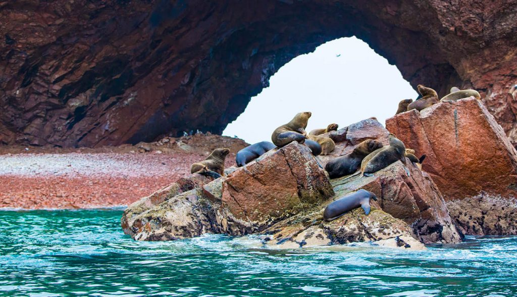 South American Sea lions relaxing on rocks of Ballestas Islands in Paracas National park,Peru