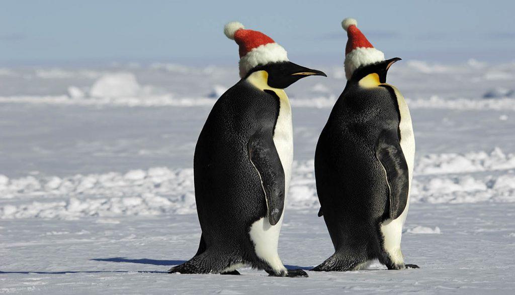 Penguin couple in Antarctica wearing Christmas hats