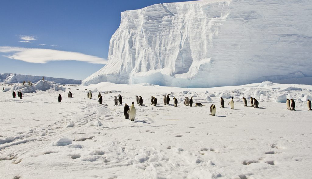 Emperor penguins on the sea ice of East Antarctica