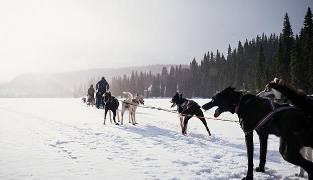 Sled Dog Expedition