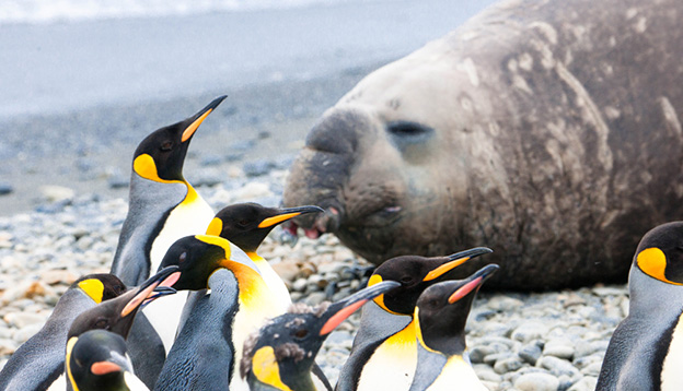 Penguins and elephant seals are lounging together in Antarctica
