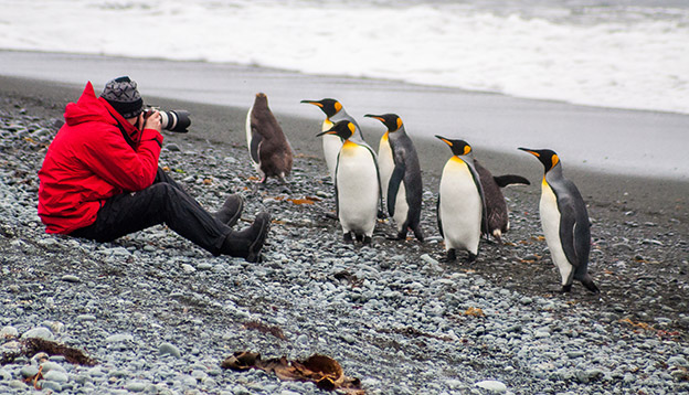 Photographing king penguins, Antarctica