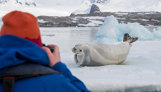 Photographer taking a picture of a Leopard Seal in Antarctica