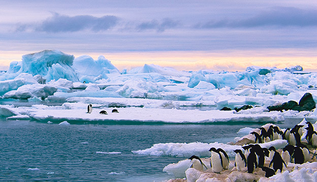 Penguins amongst the ice, Antarctica