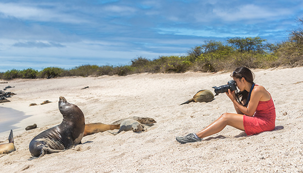 A woman takes a photo of a seal on a beach in the Galapagos, Ecuador.