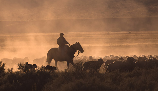 South American culture - Gaucho with a herd of sheep in Patagonia