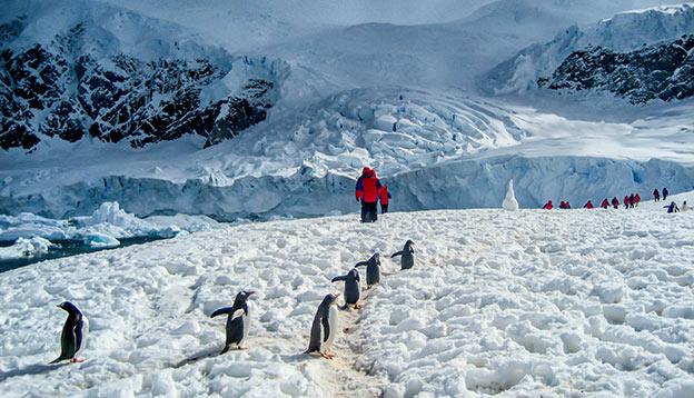 Transformative travel - people walking near penguins in ANtarctica