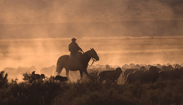 Slow Travel - Gaucho with herd of sheep - Patagonia