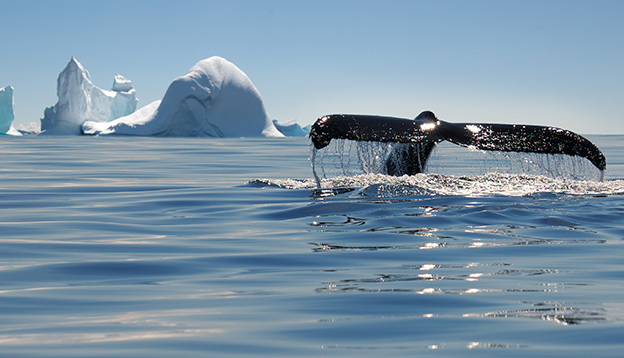 Icebergs and whale in Antarctica.