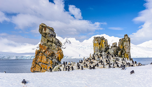 Penguins gathering in front around rocks within Antarctica.