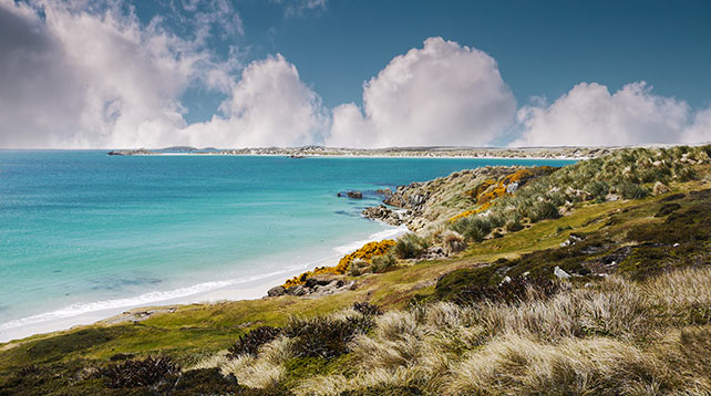 Shoreline of Falkland Islands. White sand beach and turquoise shallow water of Gypsy Cove, East Falkland Island. South Atlantic Ocean