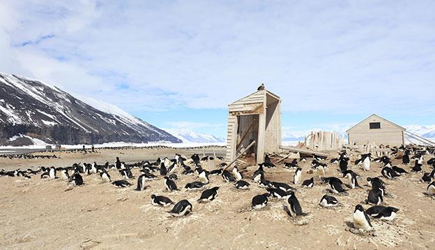 An Adelie Penguin colony on Cape Adare