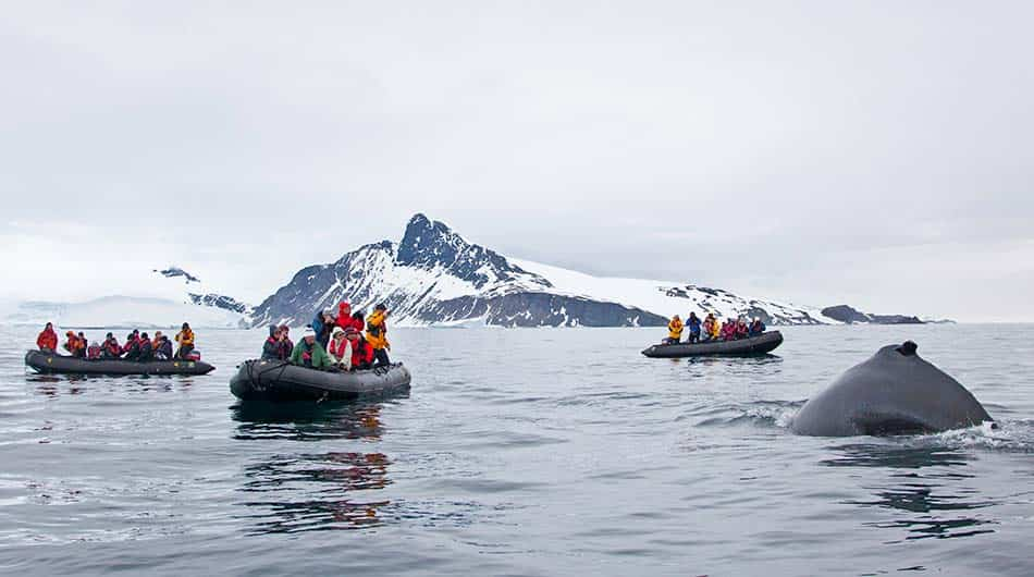 See whales on an Antarctica Cruise