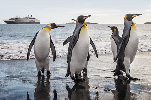 The luxury Le Boreal cruising the pristine Antarctic waters