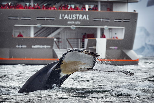 The luxury L'Austral cruising the pristine Antarctic waters